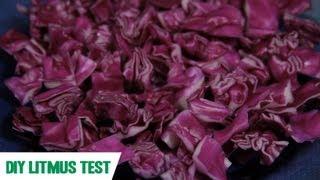 Litmus Test: SciShow Experiments
