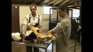 Correcting a Head Back  Dystocia Video