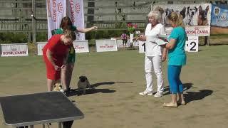 мопс, видео с выставки собак,  финалисты