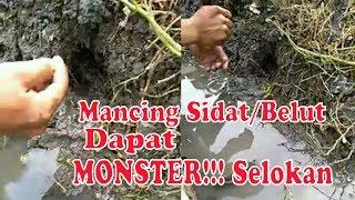 Gambar cover Mancing Sidat Dapat Monster di Selokan