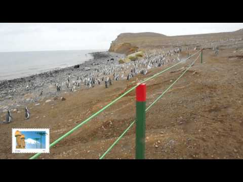 Isla Magdalena: Monumento Natural Los Pinguinos. Punta Arenas. Patagonia, Chile.