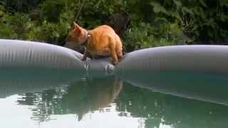 Самая большая кошачья миска