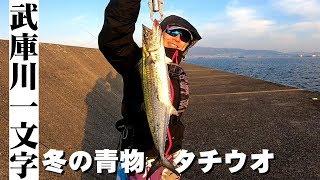 【12月】冬の武庫川一文字でショアジギング!青物・ドラゴンタチウオを狙え!