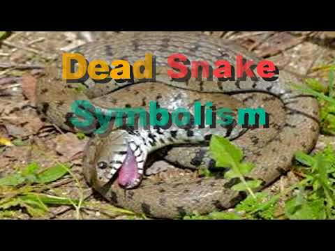 What Does It Mean To Dream Of Killing A Snake Youtube
