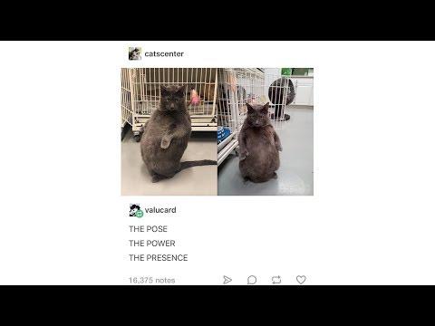 Tumblr Posts - Episode 40