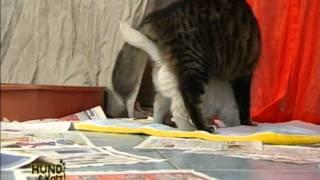Atv Serie (hund & Katz) Folge 4  - Www.goldenretriever.at