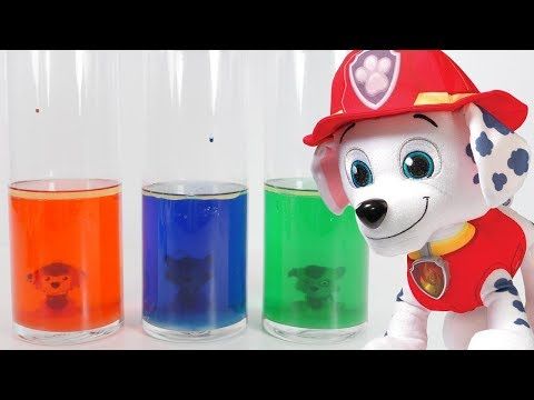 Learning Colors with PAW PATROL Science Experiment Dye Water Colors Paw Patrol Episodes