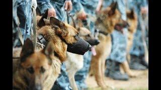 Лучшие военные собаки России