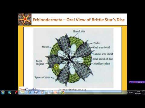 Animal Kingdom - Chordates, Pisces and Amphibians