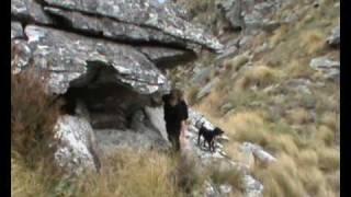 Otago Pig n Deer Combo New Zealand