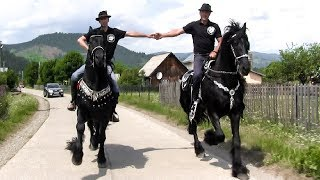 Calare pe cai friesian 🐎 Domeniul Cailor Bucovina