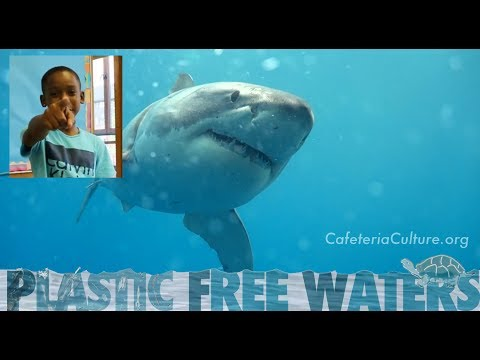 Dear Humans - a Letter from Marine Creatures; video by 4th graders!