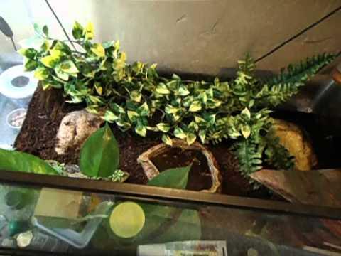 Crocodile skink cage setup - photo#8