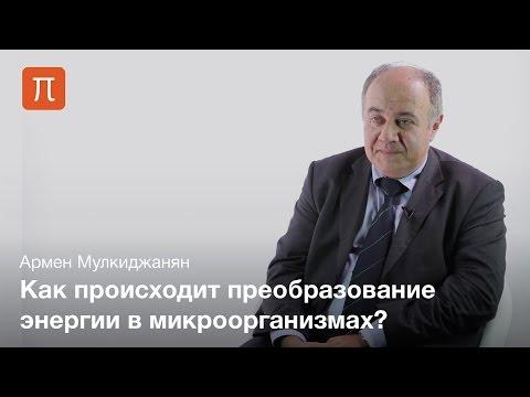 Биоэнергетические механизмы и их эволюция — Армен Мулкиджанян