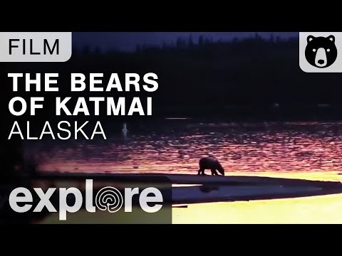 The Bears of Katmai, Alaska - Nature Live Cams Powered by EXPLORE.org