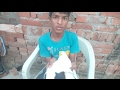 Kabutar ka pankh kaise bandhe (how to tie a pigeon feather) by chote ustad