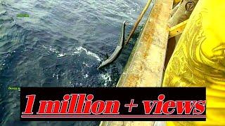 வஞ்சரம் மீன் பிடிக்கும் காட்சி | KING FISH - Handline Catching|Real Video