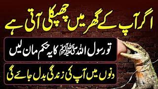 Chipkali Ko Marna Sawab Hai Ya Phir Kuch Aur Haqeeqat Kya Hai || Realty About Lizards Urdu Lab
