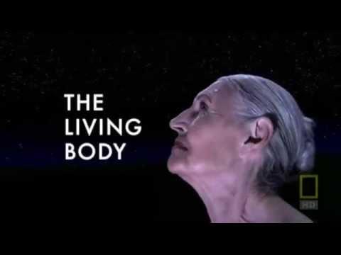 Внутри живого тела...