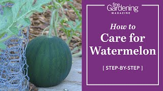 How to Care for Watermelons