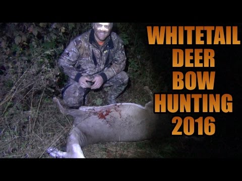Whitetail Deer Bow Hunting 2016