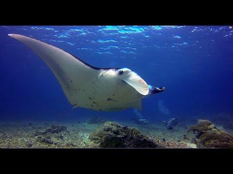 Bali and Komodo diving 2014