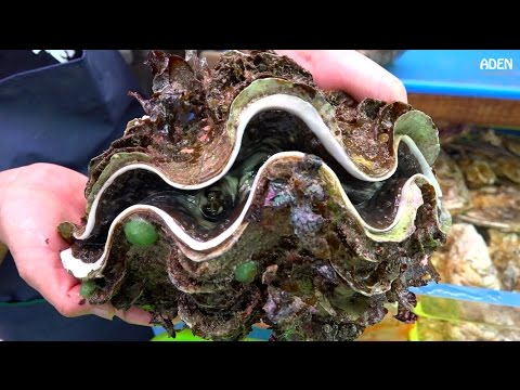 Street Food in Japan: Giant Clam