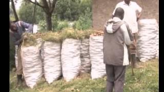 On The Farm: Hanyurwa Doing Well Farming Irish Potatoes In Kisoro