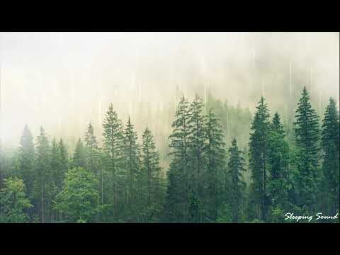 Relaxing Forest Rain for Sleeping and Relaxation