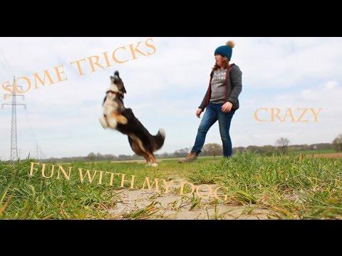 Fun with my Dog and some Tricks / Australian shepherd Milo