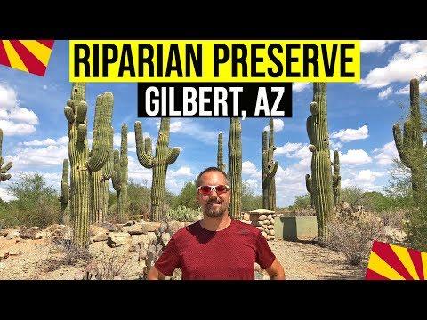 Gilbert, Arizona: Riparian Preserve | Things To Do In Arizona (Gilbert, AZ)