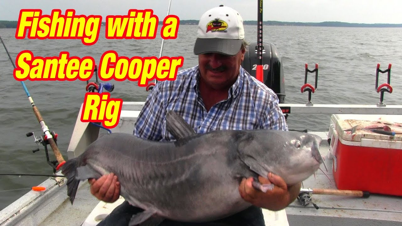 Fishing with a santee cooper rig to catch big catfish for Santee cooper fishing report
