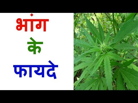 भांग के फायदे जानकर चौंक जायेंगे आप - Surprising Health Benefits of Bhang In Hindi