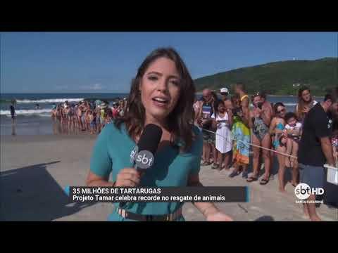 Projeto Tamar celebra 35 milhões de tartarugas resgatadas