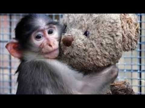 Top 15 Cutest Pictures of Animals Hugging discovery channel news