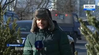 Елочные базары открылись во Владивостоке, но не все на законных основаниях
