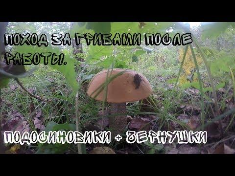За грибами. Подосиновики и чернушки (чёрный груздь). Неизвестные грибы.