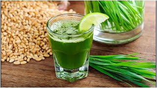 Effects Of Drinking Wheat Grass Daily- Benefits & Use