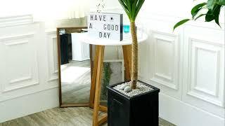 드라코 실내공기정화식물 개업화분 배달 대형 나무 집들이…