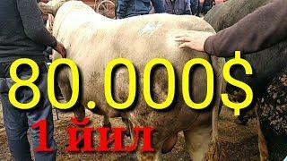 ОЛА УЗБЕКЛАР 1 йил олдинги 80.000$ кани УЗБда янги гоя