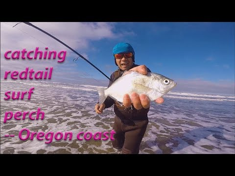 Fishing For Redtail Surf Perch