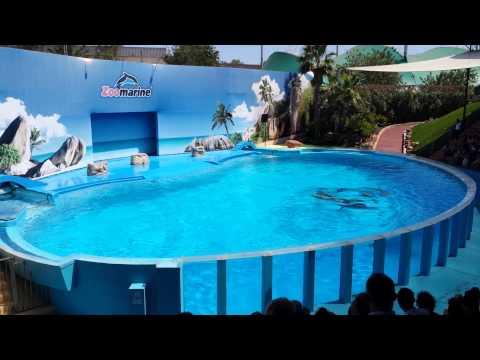 ZooMarine Guia Algarve Dolphin Show 2013