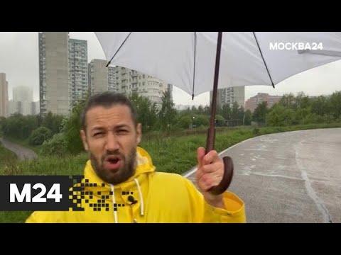 """""""Погода"""": дождливая погода ожидается в столичном регионе - Москва 24"""