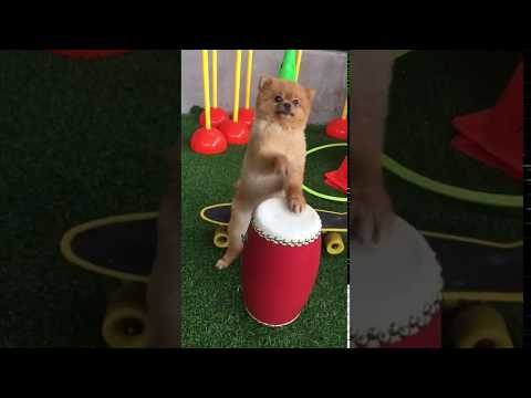 Even dogs are versatile. What talents do you have?