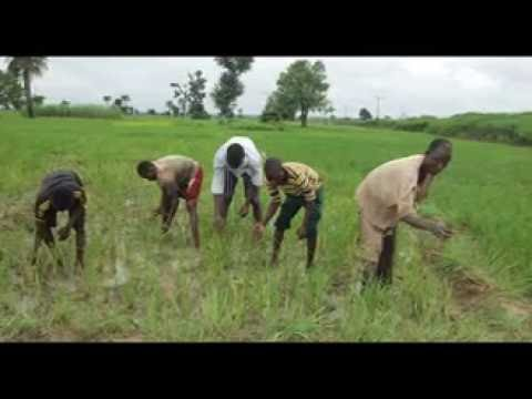 FARMERS MARKET: AGRICULTURE; NIGERIA'S REAL WEALTH