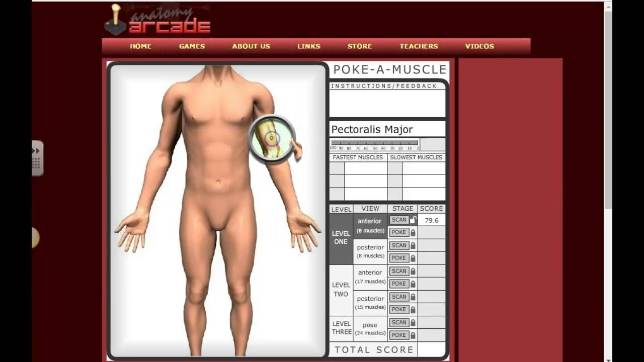 Anatomy Arcade Poke A Muscle Demo - YouTube