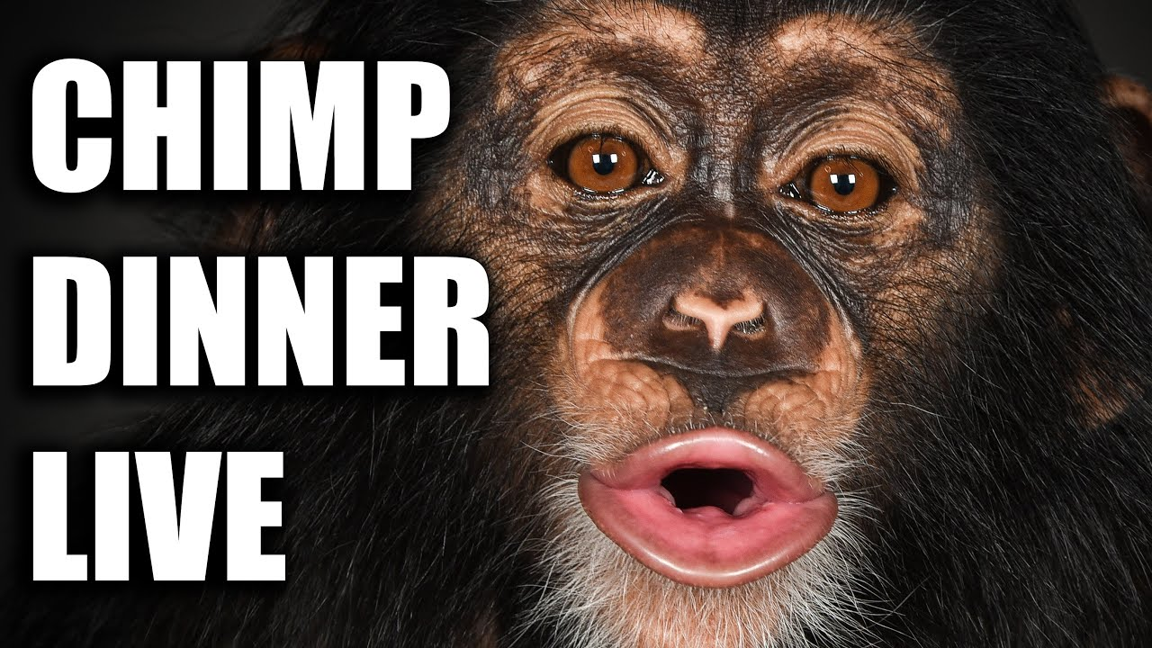 Chimp Dinner Live with Kody Antle