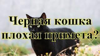 Черная кошка - плохая примета?