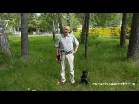 Как вылечить папилломы в ротовой полости у собаки