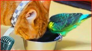 Приколы с котами #7 милые коты, lovely cats